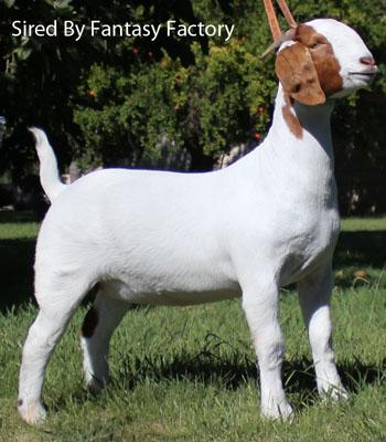 fantasyfactory_ref2.jpg